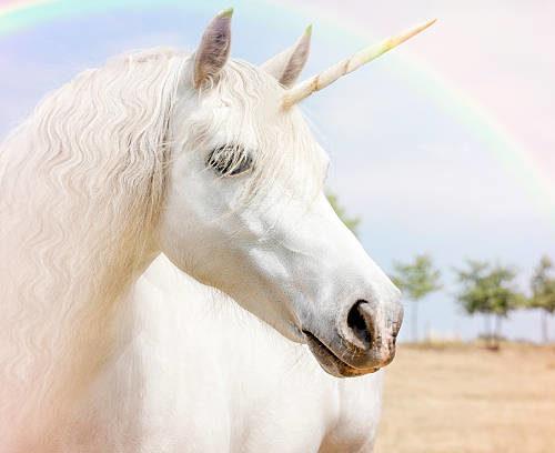 La licorne et le cafard : fable des temps modernes